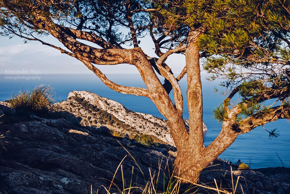 Majorca – La Victòria